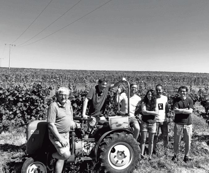 Collective Z – Lebendiger Wein aus der Pfalz